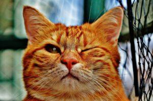 cat 1333926 1920